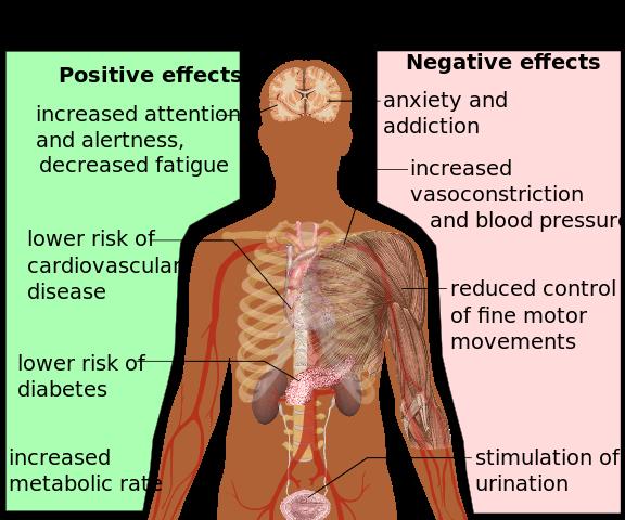 カフェインの身体への影響ってどうなの?http://commons.wikimedia.org/wiki/File:Health_effects_of_caffeine.svg?uselang=ja